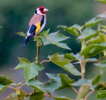 Wildvögel nahe der Ferienwohnung